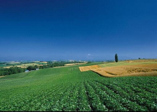优质农作物4