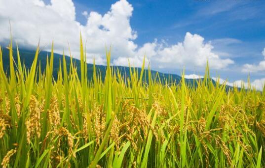 中亿农好肥效